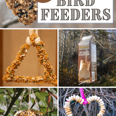 Simple Bird Feeders for Preschoolers