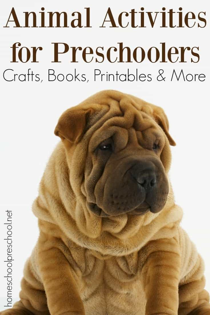 What an amazing collection of animal activities for preschool aged kids! It contains crafts, printables, books, and more! | @homeschlprek