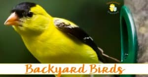 Backyard Birds Unit Study for Preschoolers