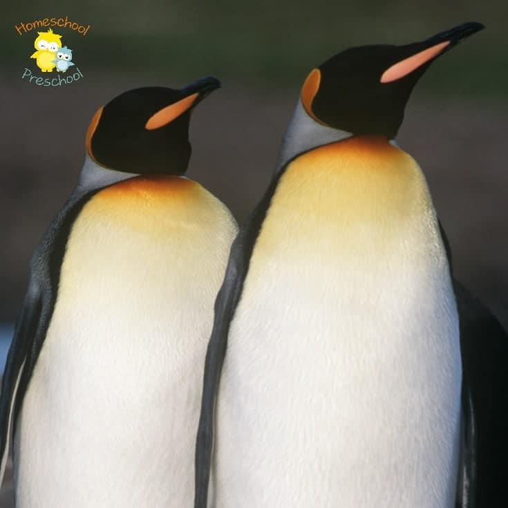 Preschoolers love penguins! Here are 5 amazing penguin books to read as you celebrate Penguin Awareness Day on January 20! | homeschoolpreschool.net