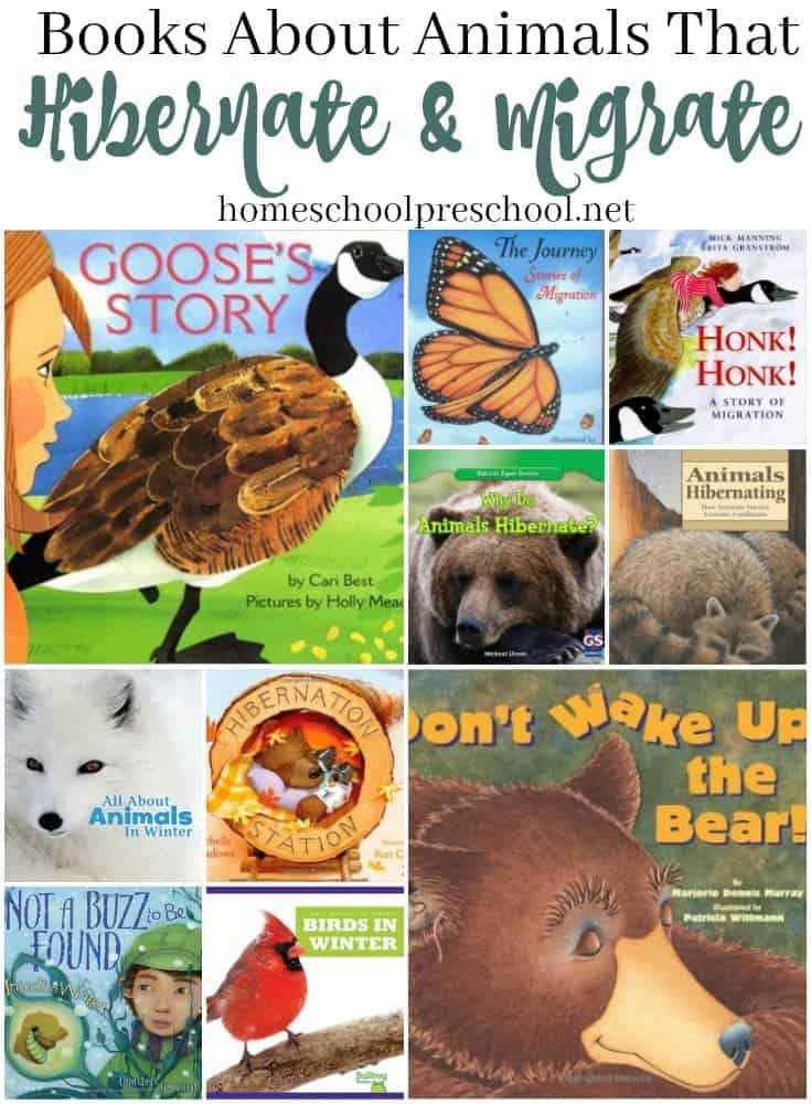 Fill your book basket with these books this winter, and learn how animals survive the long, cold winter months. Discover books about hibernation and migration. @homeschlprek