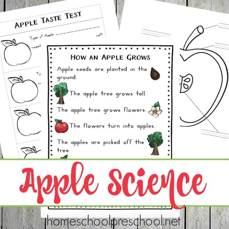 This apple-themed unit study is designed with your preschooler in mind! It's packed with fun hands-on activities, snack ideas, arts and crafts, books, videos, and a 35-page printable learning pack!   @homeschlprek