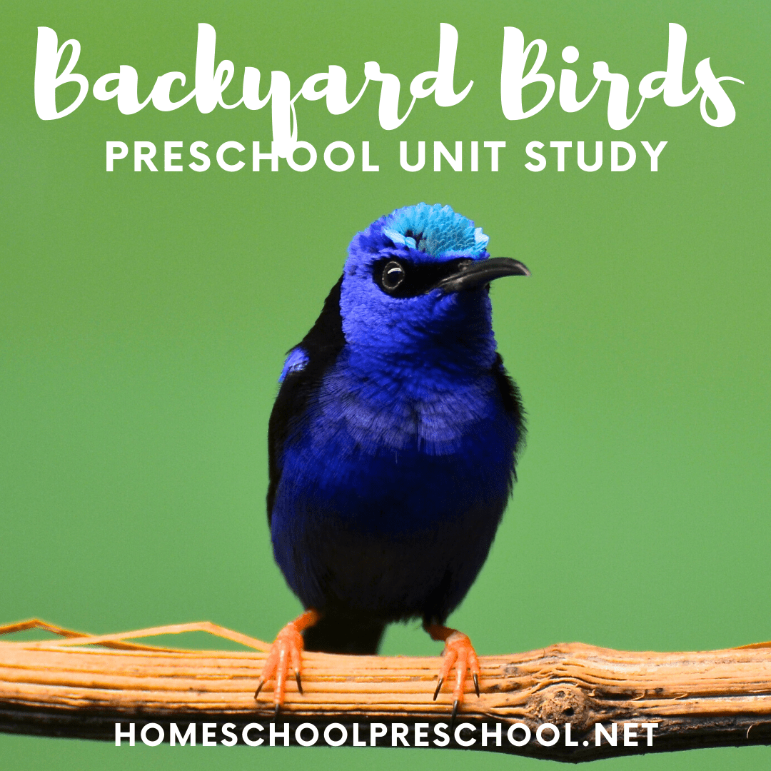 All of the beautiful birds visiting my backyard inspired me to make a Backyard Birds for Kids unit study that is perfect for your preschoolers!