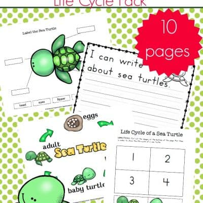 Preschool Sea Turtle Life Cycle Printable Unit Study