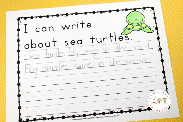 Studying marine life is exciting for kids! If your preschoolers are interested in sea turtles, it might be time for a sea turtle life cycle unit study!