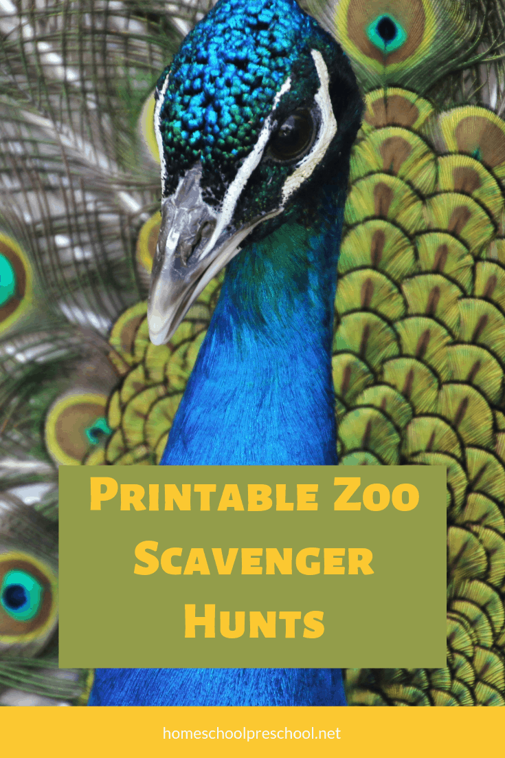 Summer's a great time to visit the zoo. Keep your kids on the lookout for animals and their features with these printable zoo scavenger hunt pages.