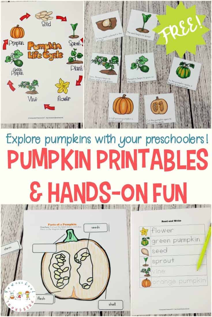 This is a great time of year to incorporate pumpkins into your preschool lessons. It's the perfect time of year to learn about the life cycle of a pumpkin.