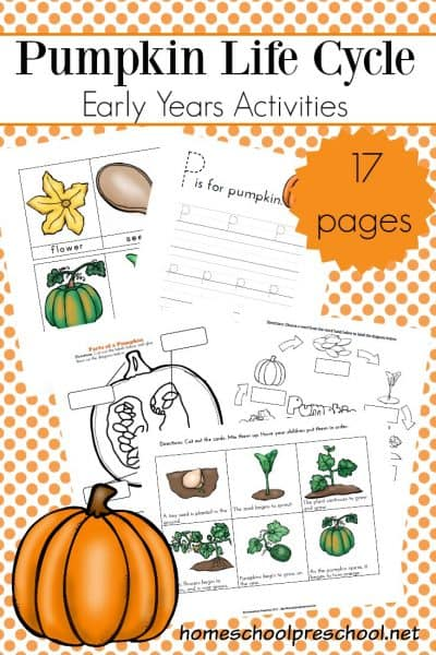 It's the perfect time of year to focus on pumpkins! Teach autumn life cycles with this life cycle of a pumpkin printable.