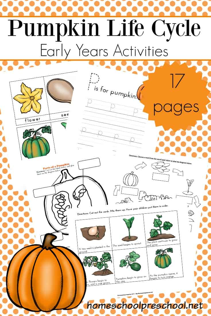 graphic about Life Cycle of a Pumpkin Printable titled Preschool Lifestyle Cycle of a Pumpkin Printable for Drop