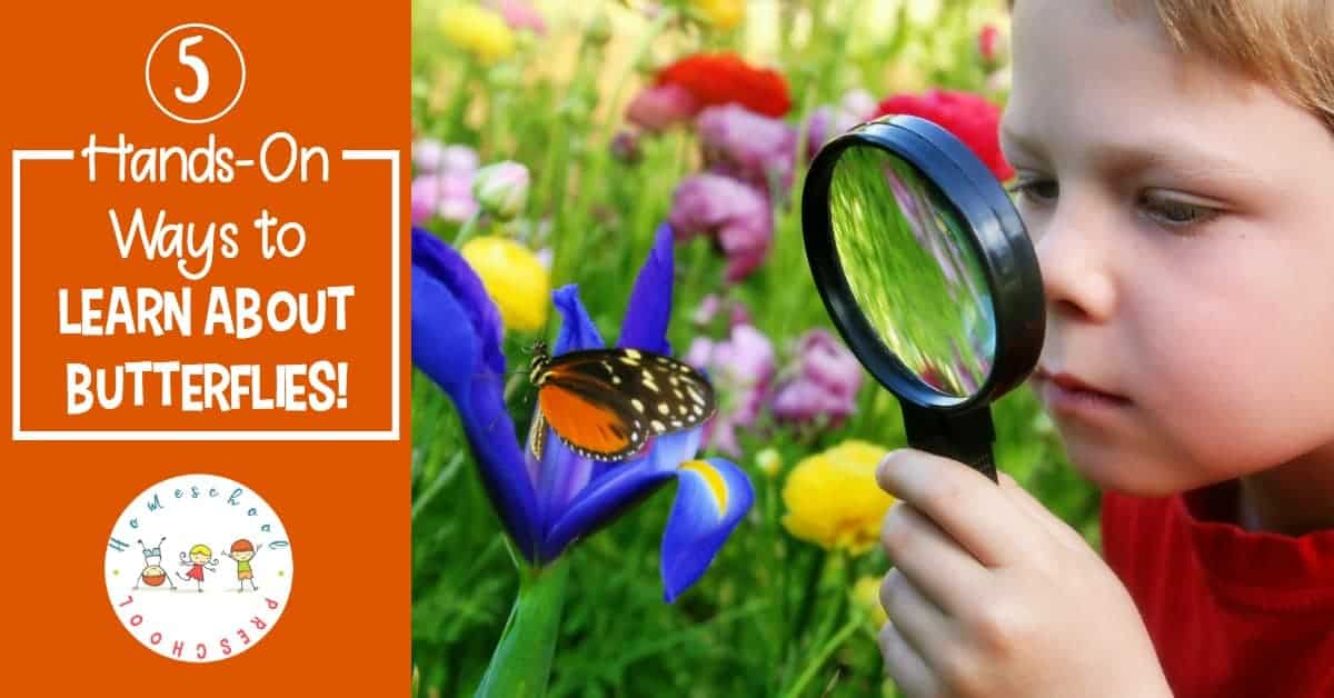 Spring is the best time of year to learn about butterflies. If you're lucky, you'll be able to watch the entire life cycle. Come discover how you can celebrate Learn About Butterflies Day!