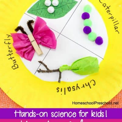 Paper Plate Life Cycle of a Butterfly Craft for Preschoolers