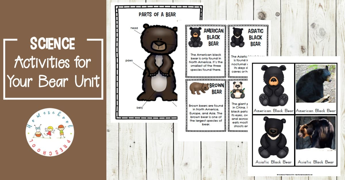 Preschoolers will have fun learning about 8 types of bears in this Let's Learn About Bears preschool unit study! There are enough activities to span a week or more!