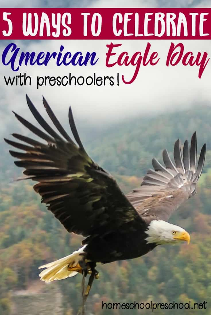 National American Eagle Day is coming up quickly on June 20th! It's a day to honor our national symbol and learn about this magnificent bird. It's the perfect time to introduce your preschooler to the bald eagle.