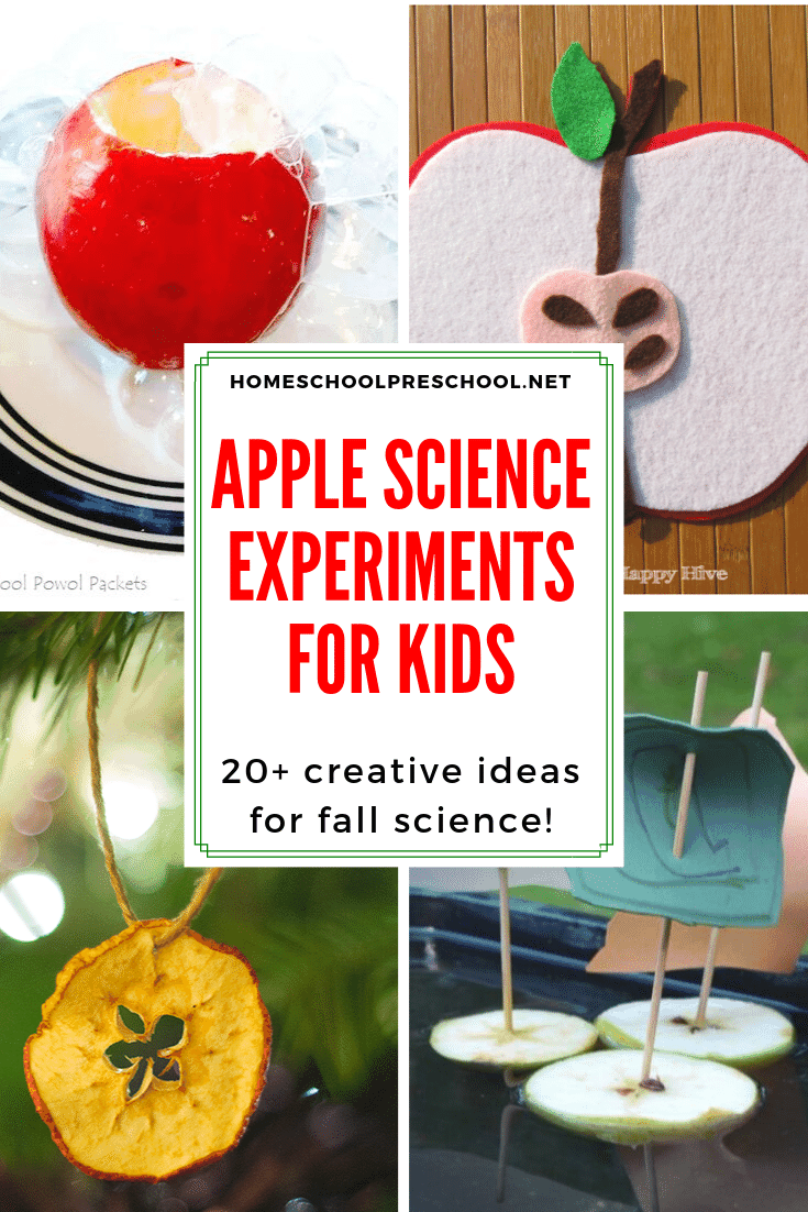 It's time to gear up for back to school. Add one or more of these apple science activities for preschoolers to your autumn lessons. The kids will love it!