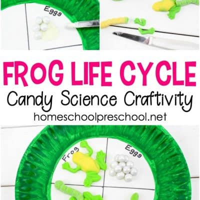 How to Make a Frog Life Cycle Candy Science Craft