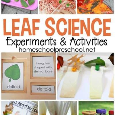 20+ Leaf Themed Science Activities for Preschoolers