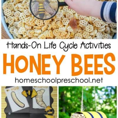 Honey Bees for Kids: The Best Hands-On Life Cycle Activities