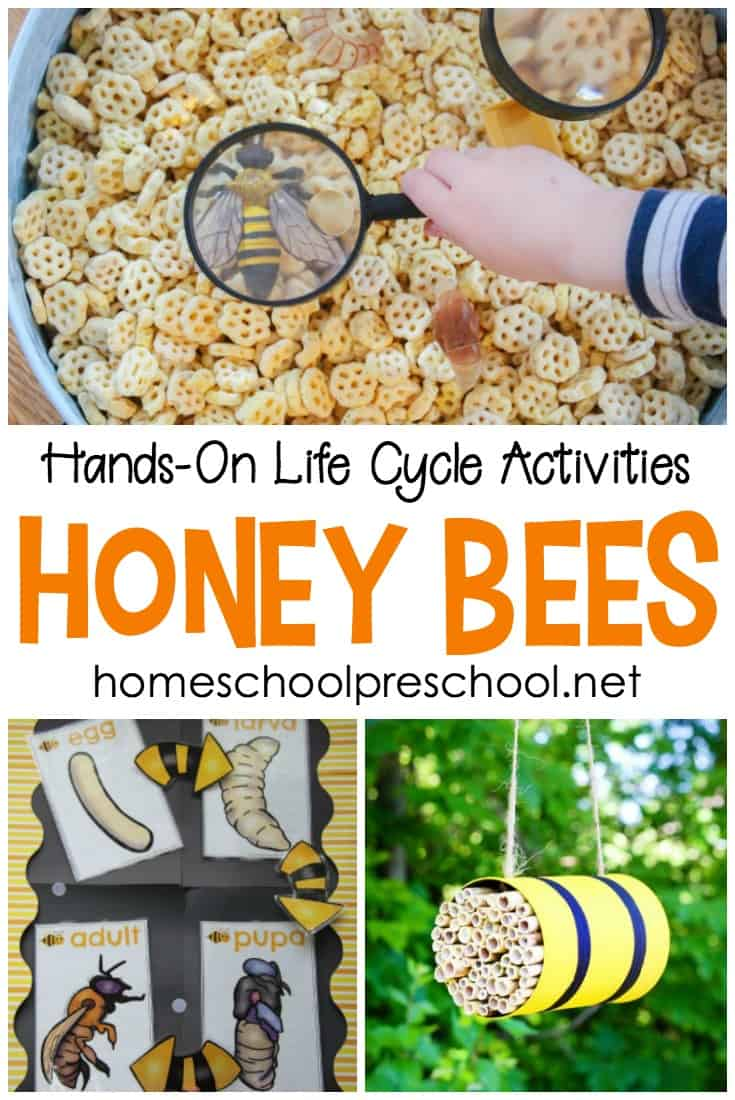 Honey bees for kids! Get ready to learn this this spring and summer with these fun, hands-on honey bee life cycle activities for preschoolers.