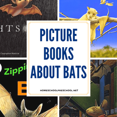 Picture Books About Bats