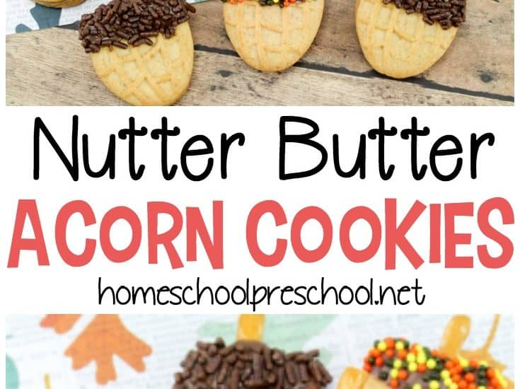 Nutter Butter acorn cookies are so easy to make! Kids can do much of the prep work on their own. These cookies are perfect for your fall preschool themes and parties.