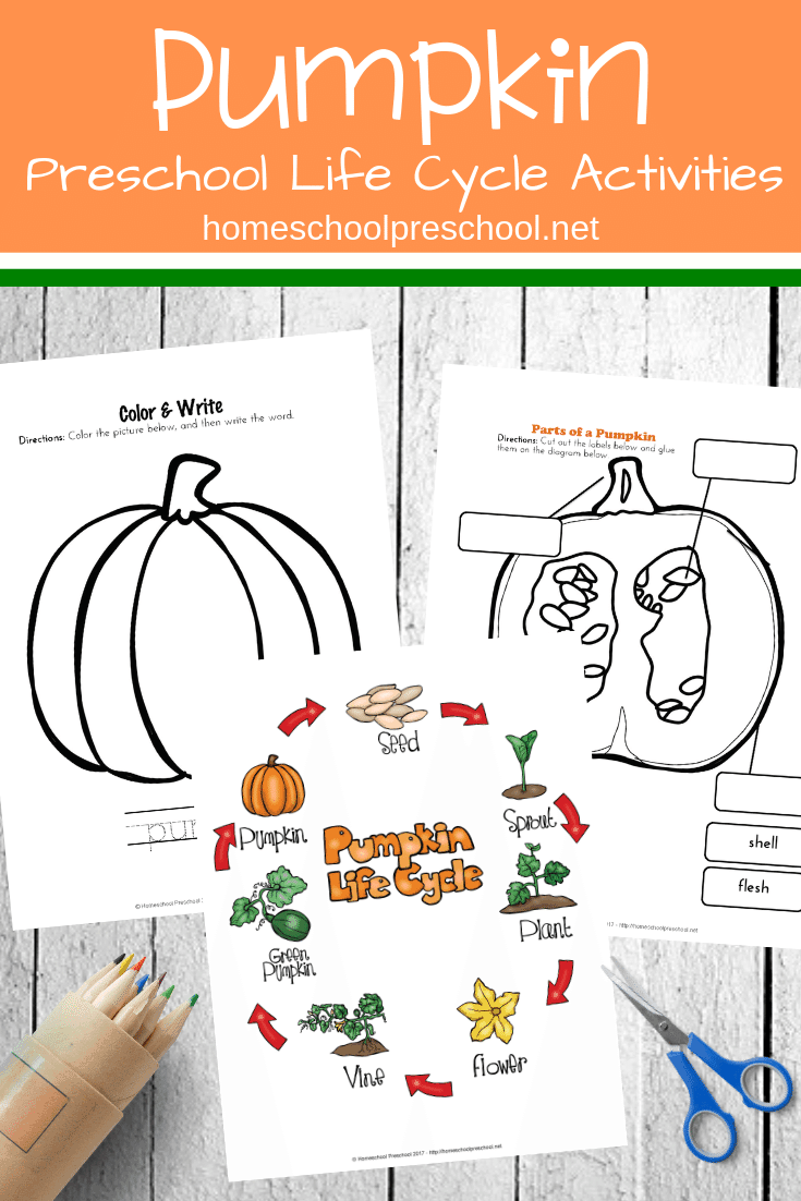 graphic relating to Pumpkin Life Cycle Printable known as Preschool Everyday living Cycle of a Pumpkin Printable for Slide