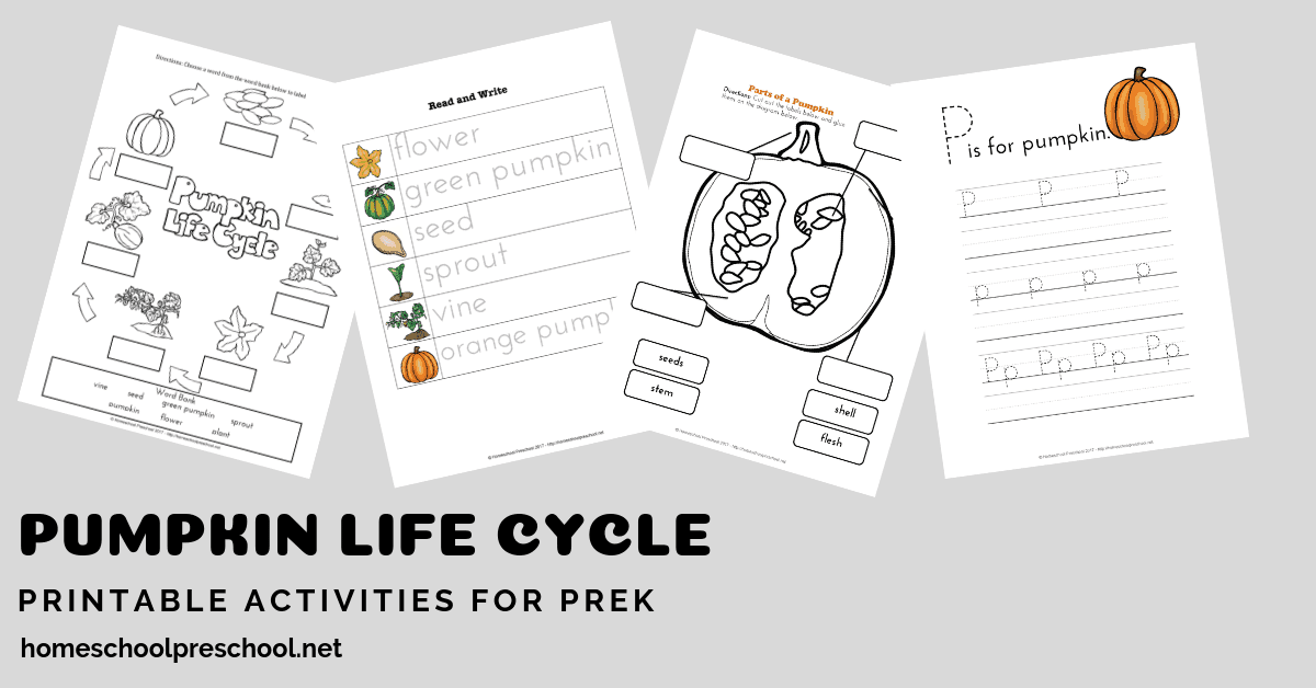 photo relating to Pumpkin Life Cycle Printable called Preschool Existence Cycle of a Pumpkin Printable for Tumble