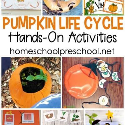 10 Pumpkin Life Cycle Preschool Activities