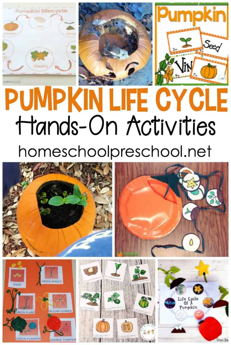 These pumpkin life cycle preschool crafts and activities will engage your young learners with more than just another worksheet!