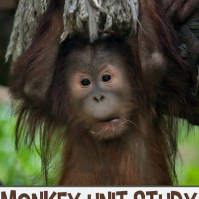 M is for Monkey Activities for Preschoolers