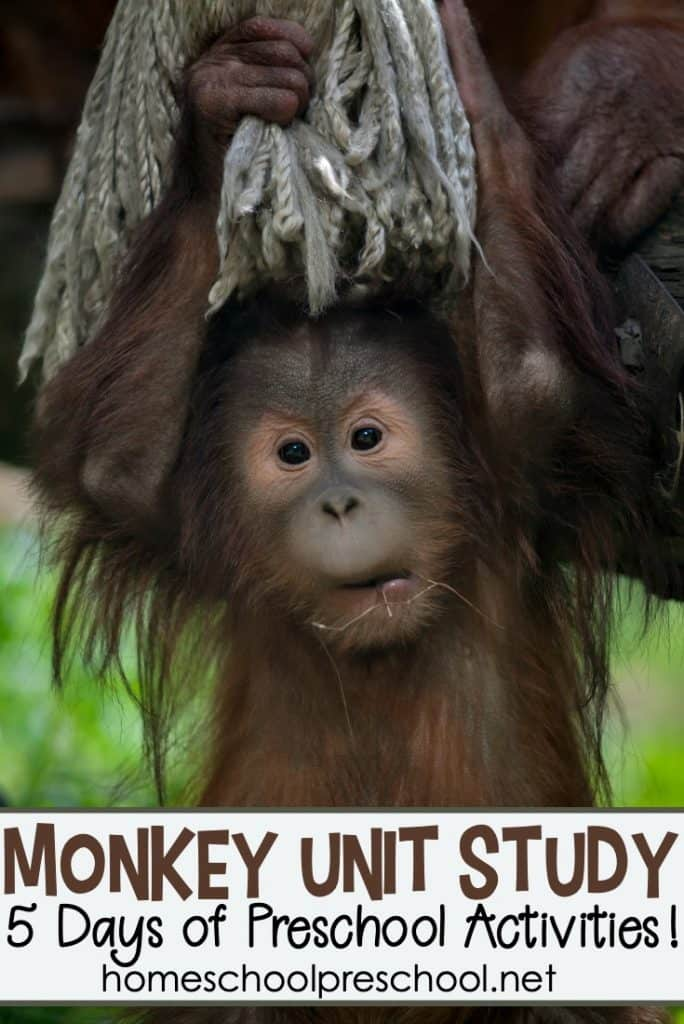 Don't miss these monkey activities for preschoolers! They're perfect for your M is for Monkey units, animal studies, and more!