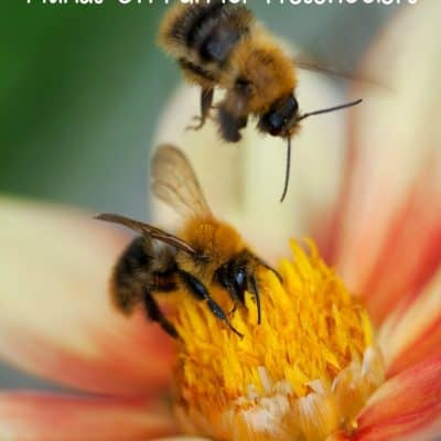 5 Bee Activities for Preschoolers
