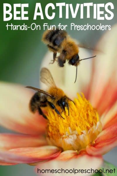 Do you have a preschooler fascinated by bees? They're a fascinating insect to study. So spend a day learning about them with these bee activities for preschoolers!