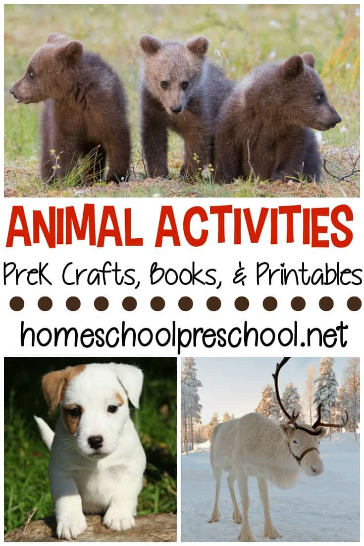 What an amazing collection of animal activities for preschoolers! It contains crafts, printables, books, and more for young learners!