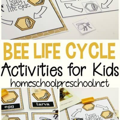 Life Cycle of a Honey Bee for Kids