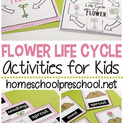 Life Cycle of a Flower for Preschool