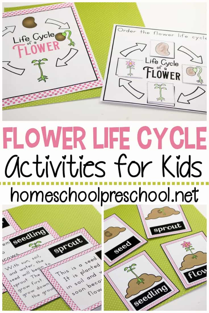 It's so much fun to learn about flowers with these worksheets that teach the life cycle of a flower for preschool. Perfect for spring and summer learning!