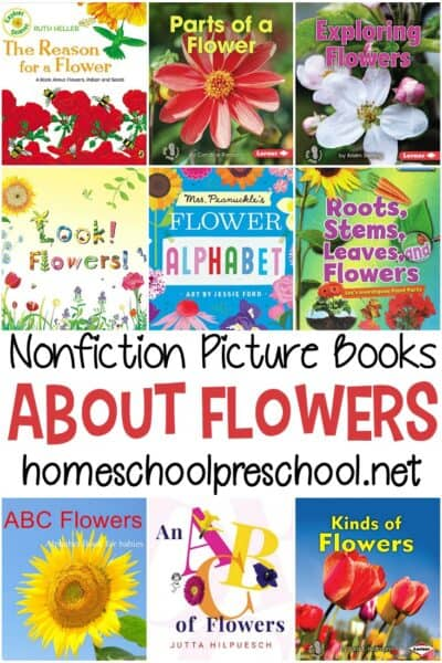 Looking for some teaching tools for your flower lesson plans? Start with these nonfiction books about flowers for preschoolers!