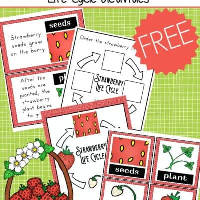 Strawberry Life Cycle Worksheet Pack