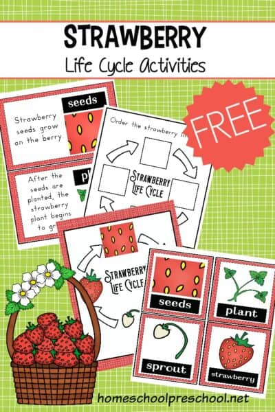 It's so much fun to learn about strawberries with this strawberry life cycle worksheet pack. It's perfect for spring and summer learning!