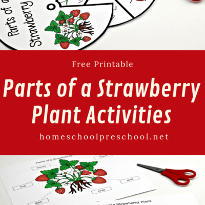 Parts of a Strawberry Plant Worksheet Pack