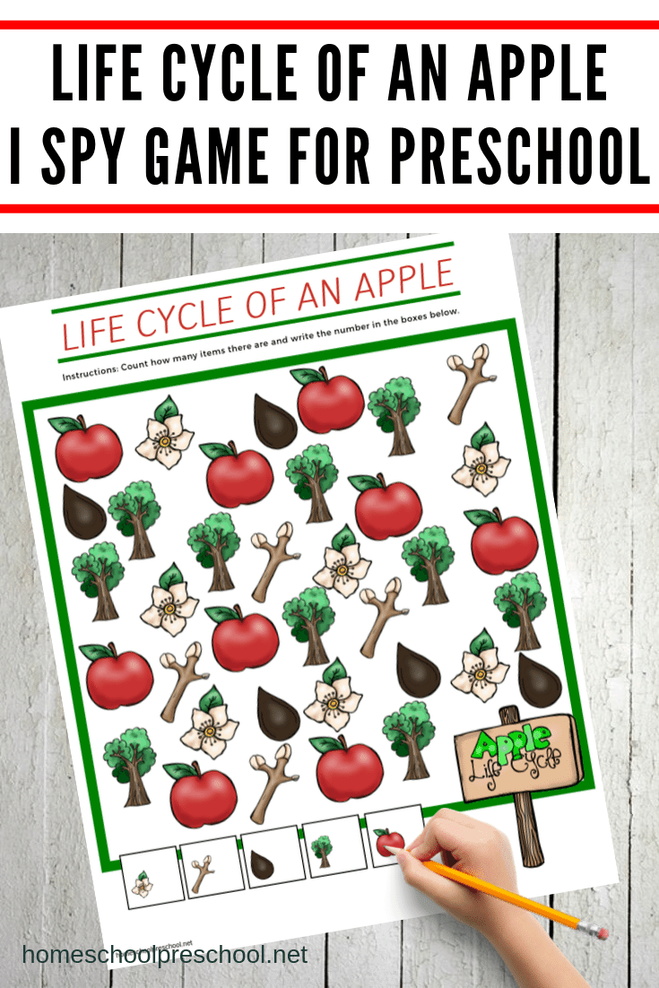 While studying apples with your preschoolers this fall, let them practice counting within ten with this Life Cycle of an Apple I Spy Game.