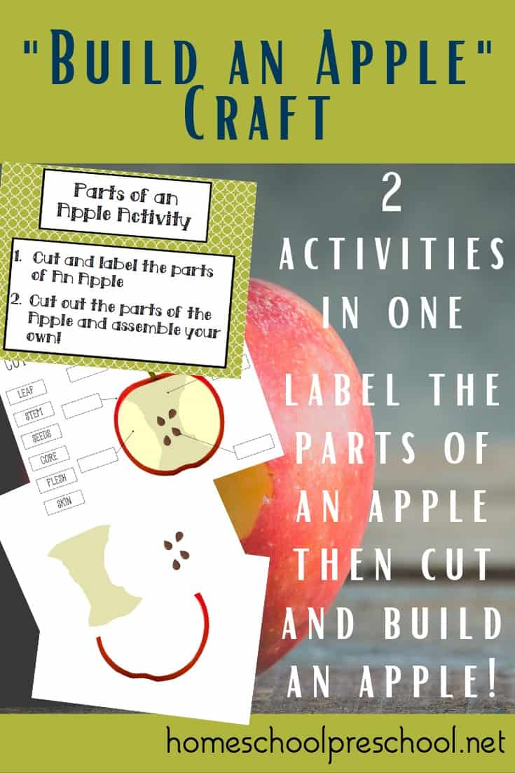 Teach kids about the parts of an apple and let them build one of their own when you present them with this engaging preschool apple craft.