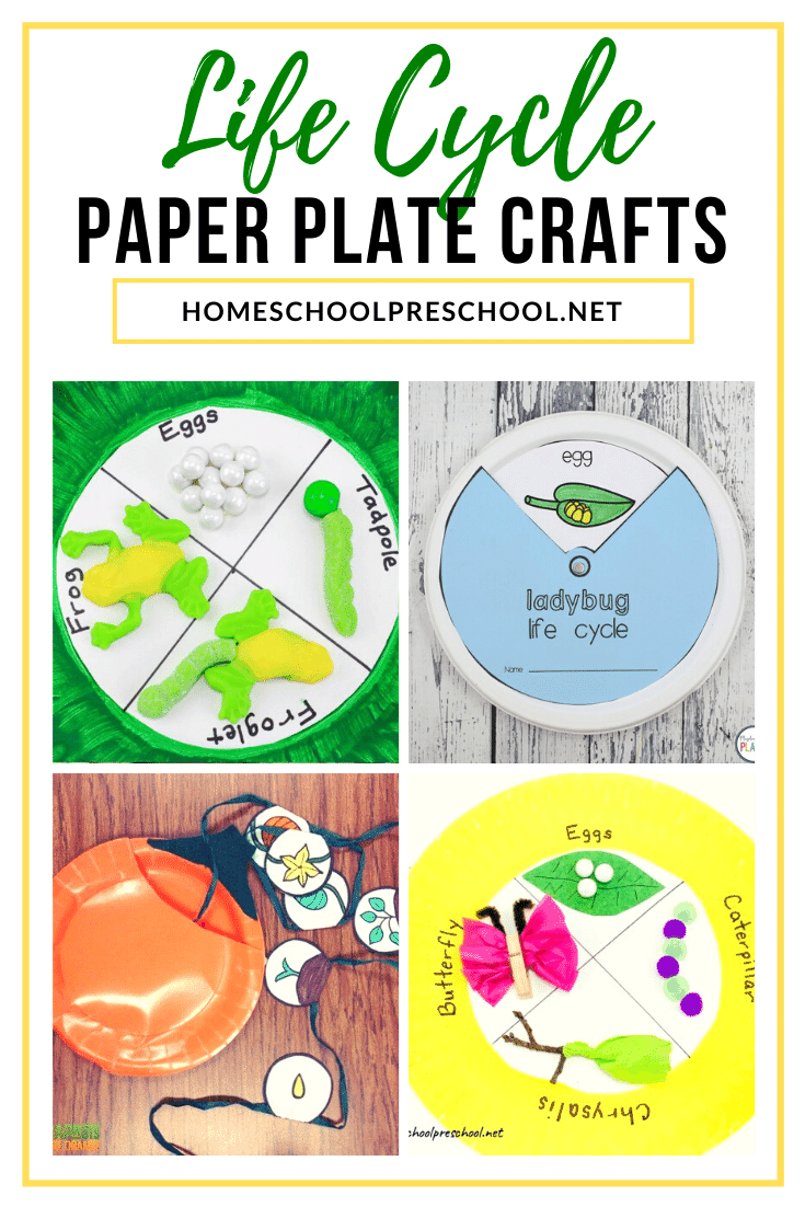 These paper plate life cycle crafts are a great way for preschoolers to visualize the cycle of living things. They're perfect all year long!