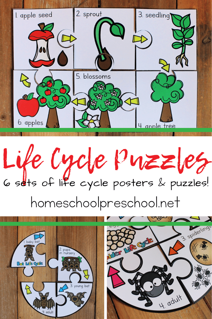 This set of six life cycle sequencing puzzles will help young learners practice sequencing as they learn the life cycle of an apple, sunflower, bat, pumpkin, bee, and spider.
