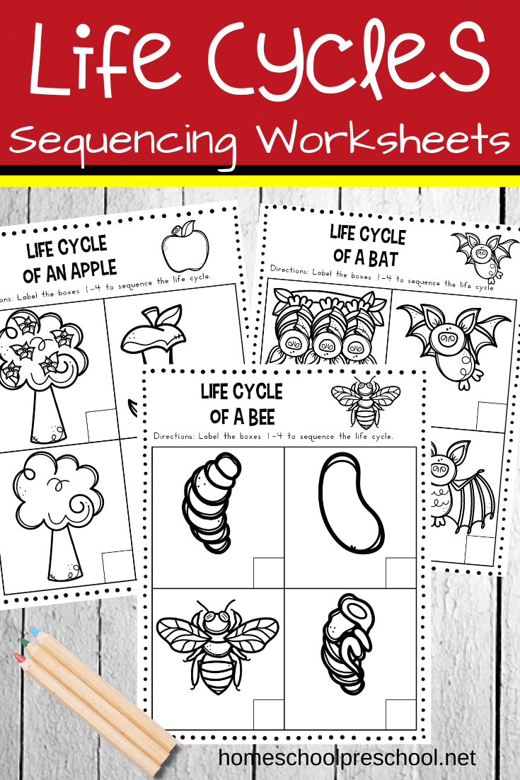 Young kids can practice putting things in order with this pack of life cycle sequencing worksheets. This pack focuses on the life cycle of six living things.