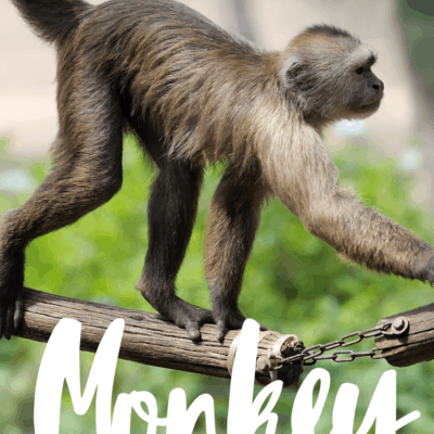 Monkey Activities for Preschool