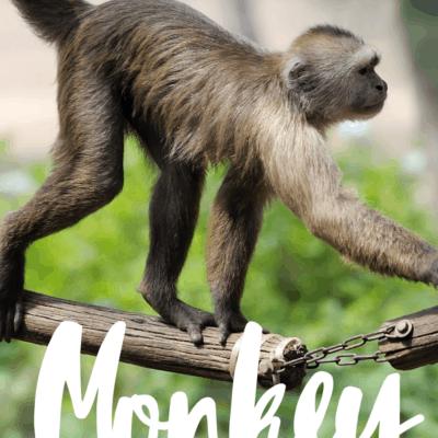 Monkey Activities for Preschool