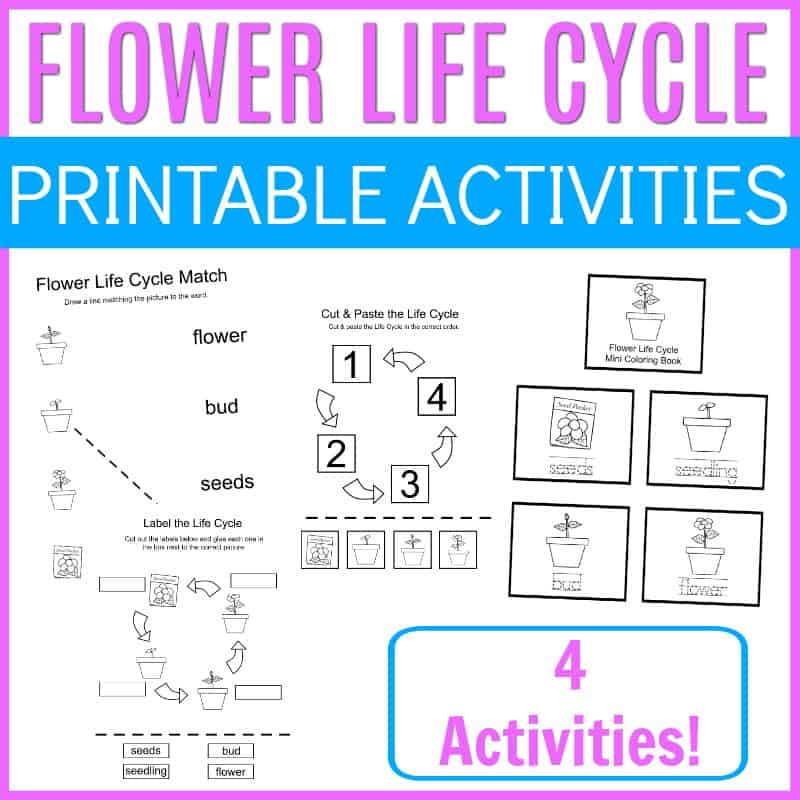 Add these preschool flower life cycle activities to your upcoming spring and summer activities. Find four printable activity pages for preschoolers.