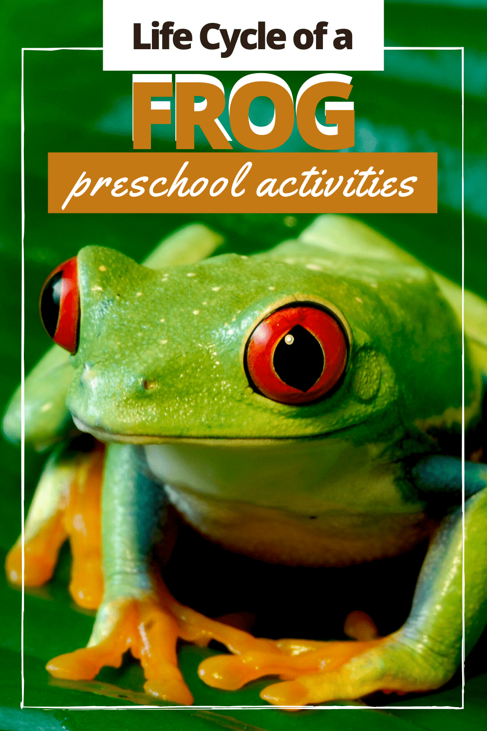 This collection of frog life cycle activities contains both crafts and worksheets that will help you demonstrate how frogs grow.