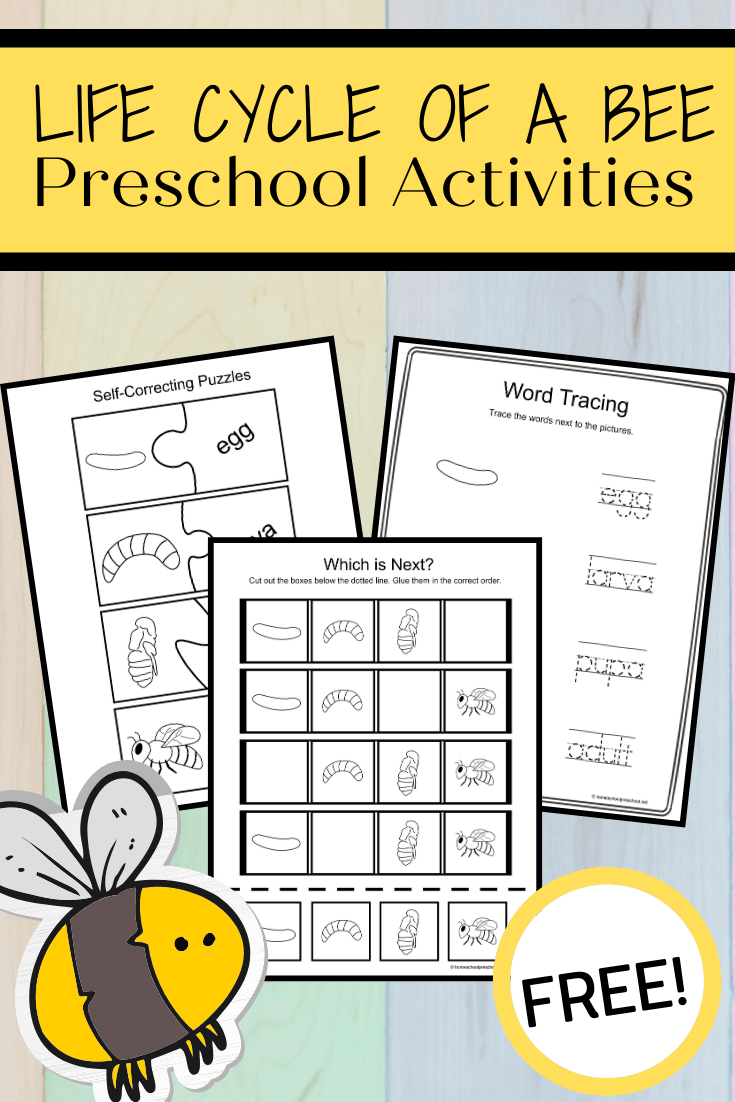Use these activity pages to teach the life cycle of a bee for kids. This set includes four activity pages that highlight all four stages of a bee's life.